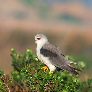 Эссе птицы наши друзья 5990