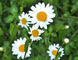 Загадки на тему: Весна для детей 4-7 лет с ответами | 232x300